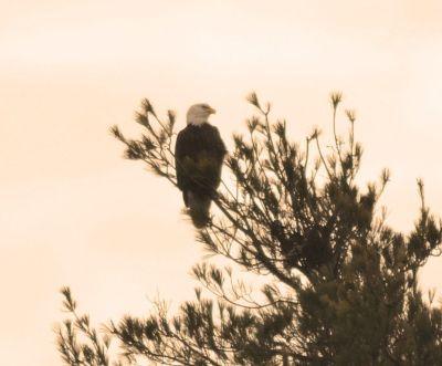 eagle_761x630